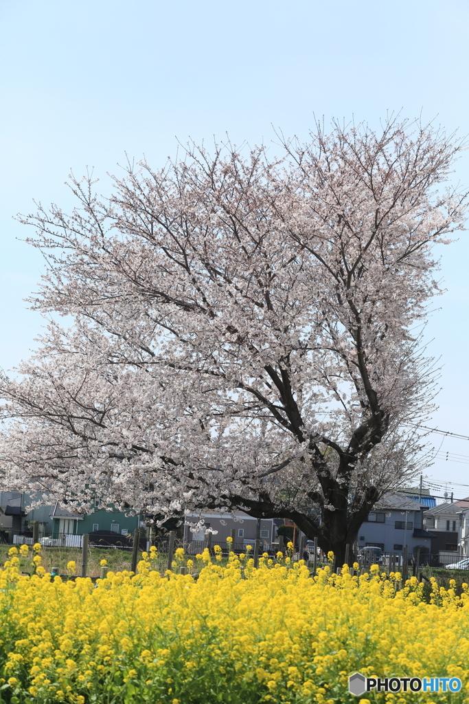 春の訪れ8