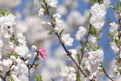 春の訪れ5