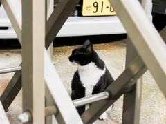 猫撮り散歩2423