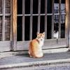 猫撮り散歩2292