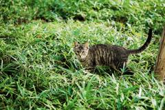 猫撮り散歩2347