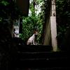 猫撮り散歩2374