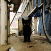 猫撮り散歩633
