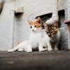 猫撮り散歩504