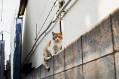 猫撮り散歩2425