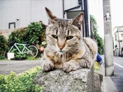 猫撮り散歩2191