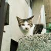 猫撮り散歩2287