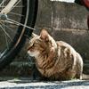 猫撮り散歩2310