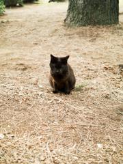 猫撮り散歩2379