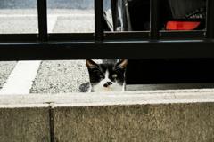 猫撮り散歩2348