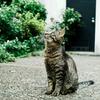 猫撮り散歩1321