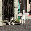 猫撮り散歩2286