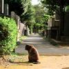 猫撮り散歩2402