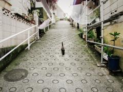 猫撮り散歩2421