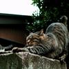 猫撮り散歩1244