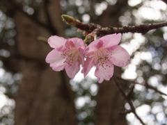 はじまりの春