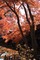 高尾山の紅葉 2017(3)