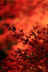 高尾山の紅葉 2017(6)