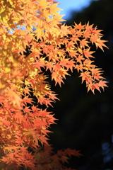 高尾山の紅葉 2017(1)