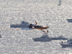 Redbull Air Race in Chiba(25)