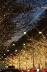 表参道のイルミネーション 2015(1)