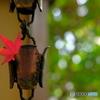紅葉と鎖樋