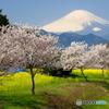 こんな時は富士を、桜を。