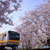 桜と南武線