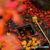 金福寺のツクバイ
