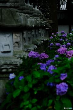 由緒寺院に咲く。