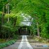 鎌倉一美しい参道