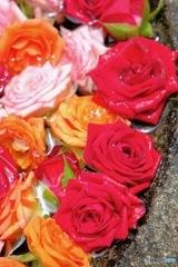神前の薔薇