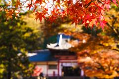 奈良公園~紅葉~