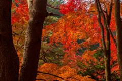 扇谷の紅葉