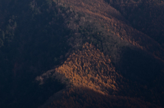 晩秋の樹林帯
