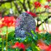 石仏を囲む彼岸花