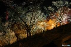 夜桜のファンタジー