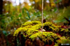 秋の彩り3