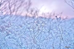 冬のパウダー