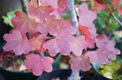 赤く色づいた葉