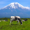 富士より牧草