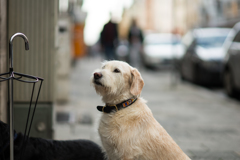 a waiting dog in front of a door