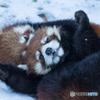 れさぱん in winter