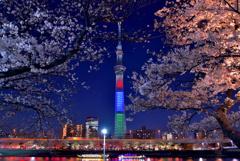 隅田公園の夜桜2