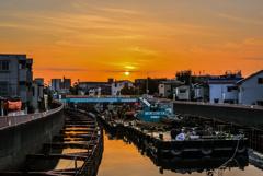 呑川の朝2
