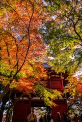 本土寺の紅葉2