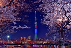 隅田公園の夜桜