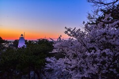 酒田 日和山公園の桜