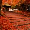 晩秋の安楽寺参道