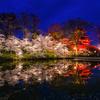 高田城址公園の夜桜